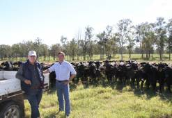 Don Nicol and Freddy Maisonnave (Paraguay) observing some heifers