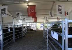 Beef Week 2012